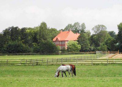 Herrenhaus Borghorst Pferde 2