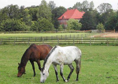 Herrenhaus Borghorst Pferde 3