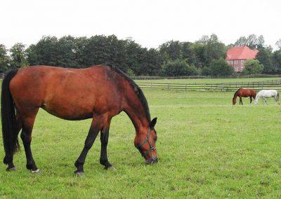 Herrenhaus Borghorst Pferde